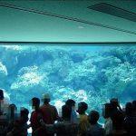 沖縄美ら海水族館に行ってまいりました・2