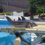 沖縄美ら海水族館に行ってまいりました。・6