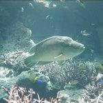 沖縄美ら海水族館に行ってまいりました。・7