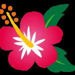 flower_hibiscus