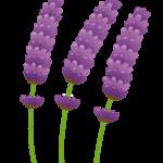 flower_lavender